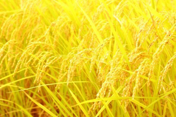 秋の味覚も京ばし「松輪」にて。
